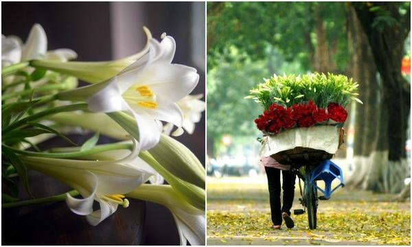 Tháng 4 năm nay: Người ta chỉ biết nhớ thương mùa loa kèn trắng tinh khôi của Hà Nội