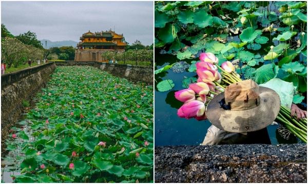 Tháng 4 gọi về mùa sen thơm ngát cả một vùng trời cố đô Huế