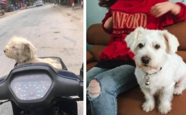 """Xúc động hành trình tìm lại chú chó thất lạc 1 năm trời: """"Phép màu"""" giữa đời thường là có thật!"""