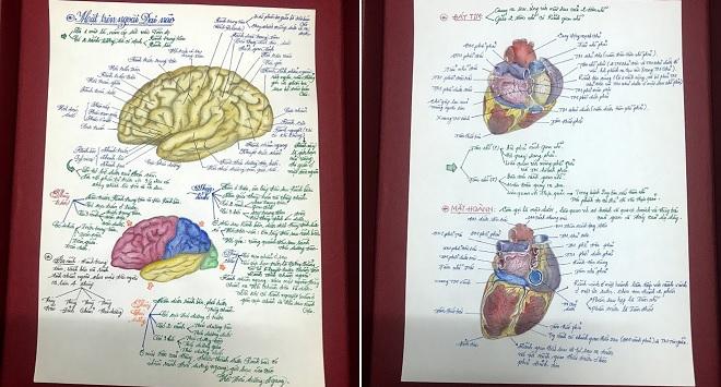 Tưởng sinh viên mỹ thuật khoe tranh vẽ, nào ngờ tác giả lại là nam sinh ngành y