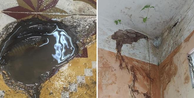 Cám cảnh học trò đi học ở những trường lớp tồi tàn: Mưa dột, cá bơi trong lớp, cây mọc trên tường