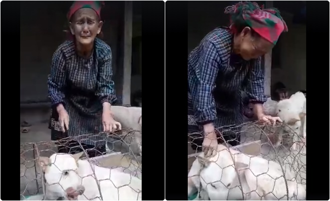 Cảm động với cụ bà vùng cao khóc hết nước mắt khi phải bán chó, bạn trẻ ra tay giúp đỡ mua lại chó cho cụ