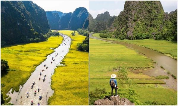 """Tháng 5 về Ninh Binh để chiêm ngưỡng """"Mùa Vàng Tam Cốc"""" mà tạp chí nổi tiếng ca ngợi"""