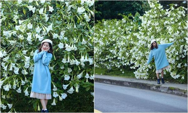 Đà Lạt mùa Hoa Chuông trắng tinh khôi làm người ta xao xuyến khôn nguôi