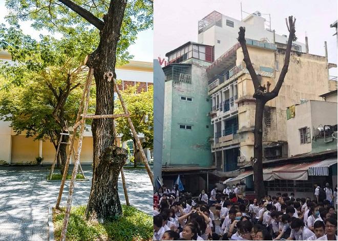 """Hành động tuyệt vời của thầy cô Đà Nẵng: Không chặt cây mà tạo """"lá chắn"""" giúp cây xanh không đổ ngã, giữ lại bóng mát cho học trò"""