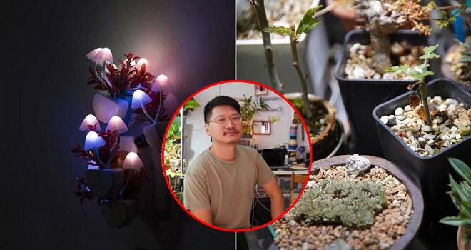 """Khi họa sĩ dùng các loài cây làm phương tiện sáng tạo: """"Đối diện với thực vật là học cách đối phó với mọi người"""""""