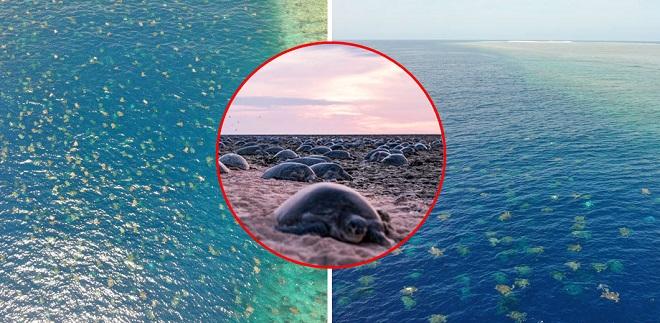 Dùng thiết bị bay không người lái đếm được 64.000 cá thể rùa biển, các nhà khoa học còn để lại cảnh đẹp hiếm có