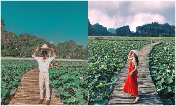 Đẹp lụi tim con đường gỗ giữa cánh đồng sen đang nở rộ ở Hang Múa, Ninh Bình