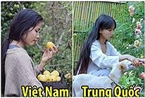 Bị ném đá rào rào, Youtuber Việt