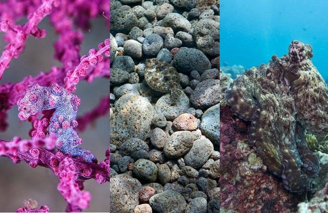 Những sinh vật dưới nước này là bậc thầy ngụy trang, liệu bạn có thể phát hiện ra chúng?