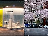 Nhật Bản sáng tạo toilet công cộng trong suốt, có người vào tự khắc làm mờ, đi vệ sinh cũng phải sang chảnh