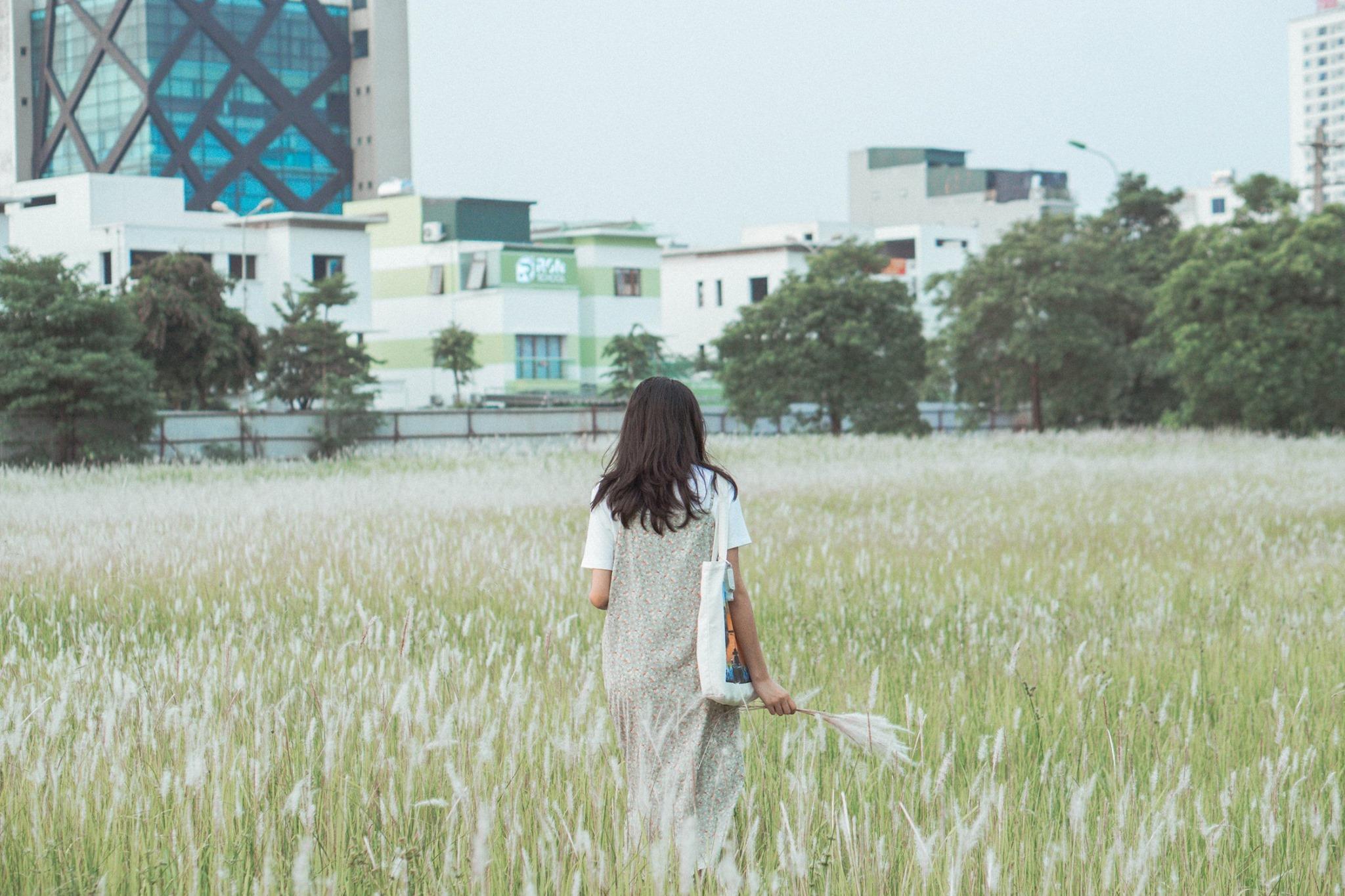 Chẳng thể đi Đà Lạt ngắm cỏ hồng, cuối tuần vi vu Hà Nội, check in cháy máy với những cánh đồng lau trắng