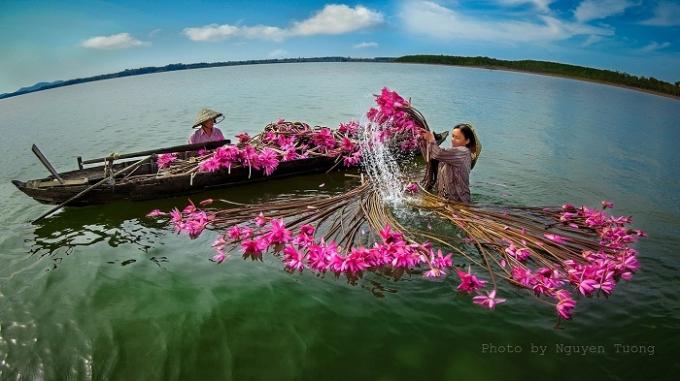 """Tháng 9 này ghé Đồng bằng sông Cửu Long ngắm mùa hoa súng nở đẹp """"lịm tim"""""""