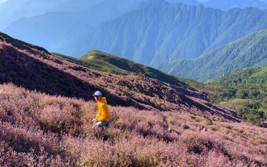 """Mùa hoa tím về trên đỉnh Tà Chì Nhù đẹp như một giấc mơ khiến ai cũng muốn được """"say"""" một lần"""