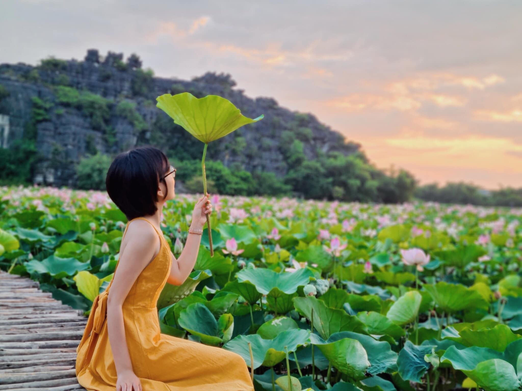 Ngạc nhiên sen hồng nở giữa mùa thu, đến Hang Múa Ninh Bình thưởng hoa, chụp ảnh trước khi hoa tàn nào