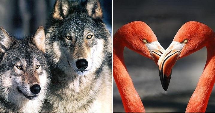 10 động vật chung thủy bậc nhất, luôn nói không với chuyện ngoại tình