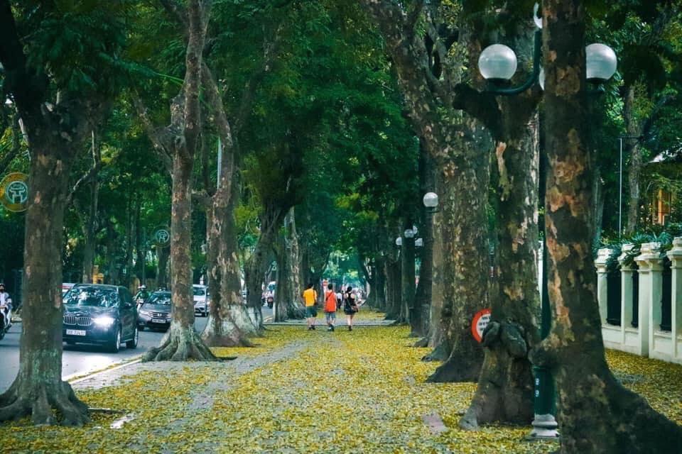 Gọi tên con đường đẹp nhất Hà Nội khi bước vào mùa thu thay lá