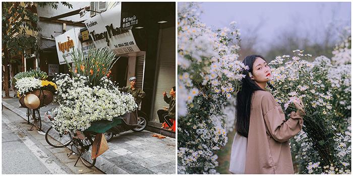 """Đếm ngược từng ngày mùa cúc họa mi tinh khôi """"bước"""" xuống phố phường Hà Nội"""