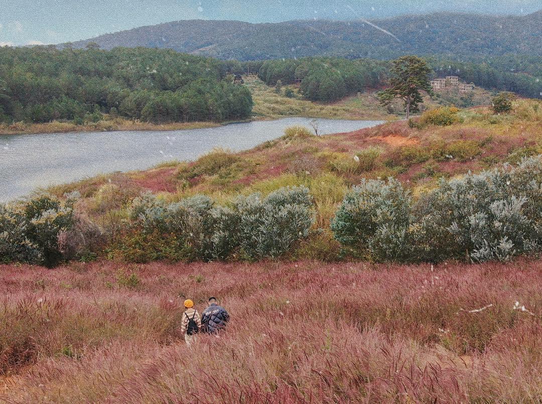 """Chả cần cưa cũng """"đổ gục"""" trước Đồi cỏ hồng đuôi chồn đẹp tựa xứ Nhật Bản ở Đà Lạt tháng 10"""