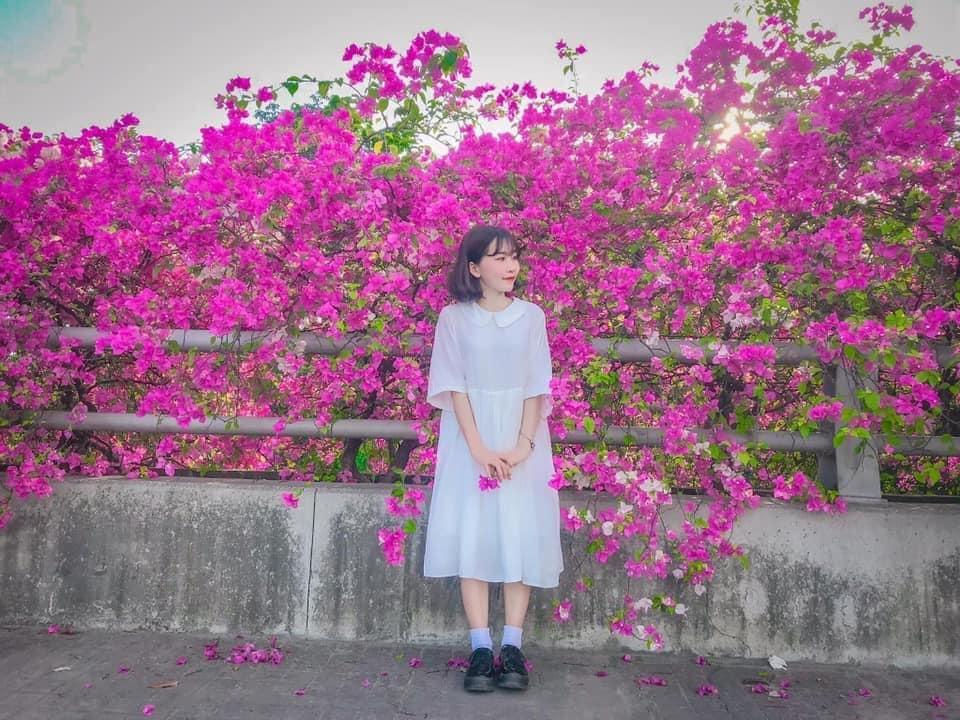 """Tái ngộ mùa hoa giấy ở """"Cây cầu hoa"""" bên hông Hà Nội đang bất ngờ nở rộ vào tháng 10 này"""