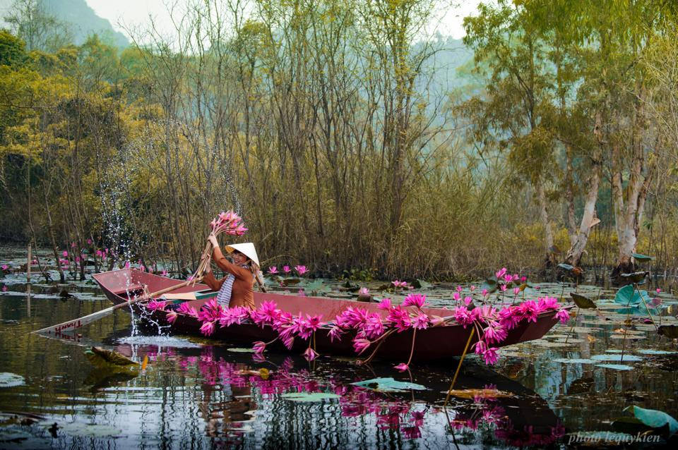 """Hà Nội vào thu cũng là lúc mùa hoa súng nở trên suối Yến tạo thành """"dòng sông tím"""" đẹp nao lòng"""