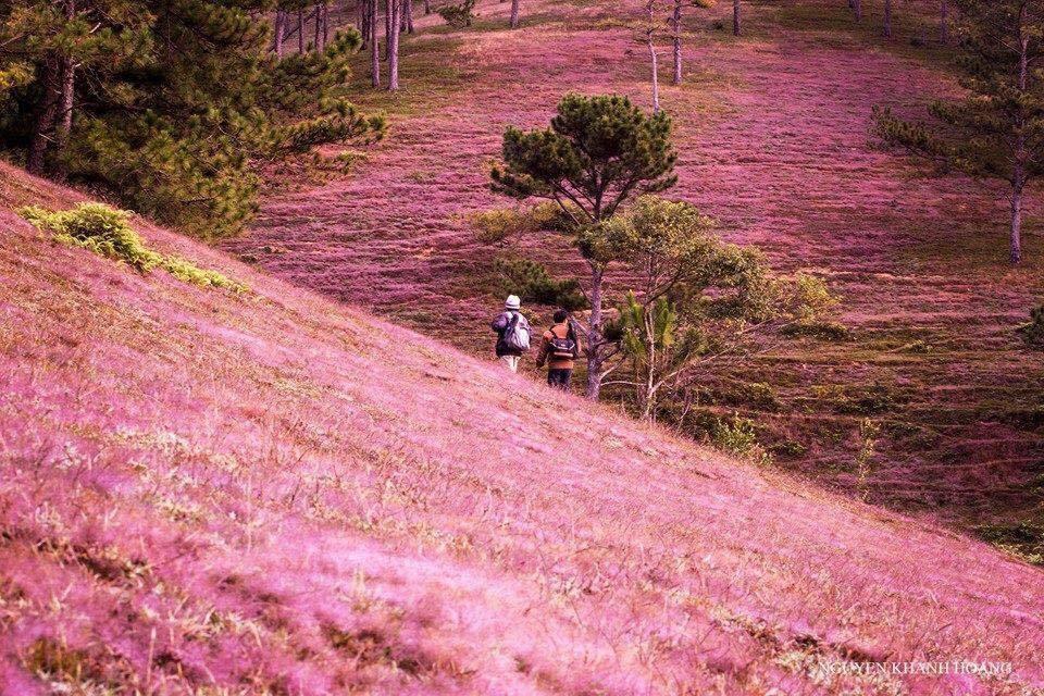 """""""Một chấm là say đắm"""" mùa cỏ hồng Đà Lạt đẹp tựa nàng thơ xứ cao nguyên"""