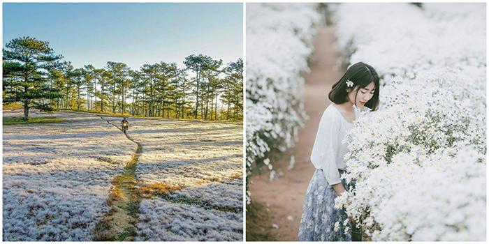 """Đi đâu để ngắm mùa hoa đẹp: Ghim lại ngay những địa điểm """"mùa nào hoa nấy"""" này"""