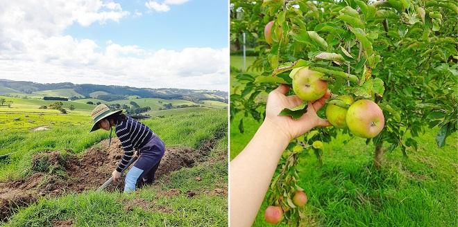 Kết hôn với đồng nghiệp, cô giáo dạy tiếng Anh bỏ thủ đô về làm nông tại trang trại nhà chồng khiến bao người ghen tị