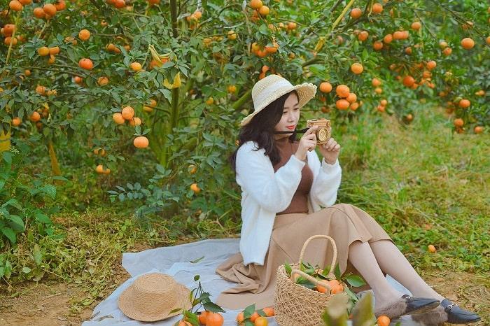 Ngắm tận mắt những vườn cam chín vàng ở Mộc Châu, đem về bộ ảnh cô gái hái cam nghìn like